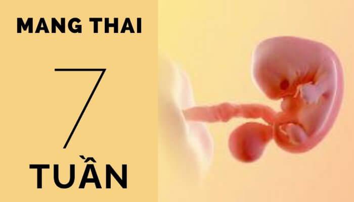 Thai 7 tuần tuổi