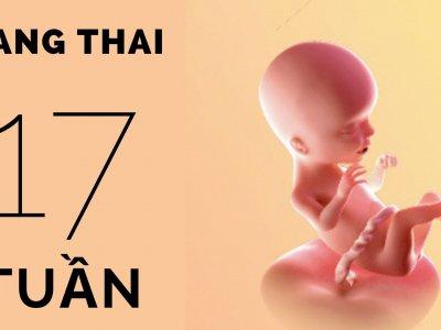 Mang thai 17 tuần