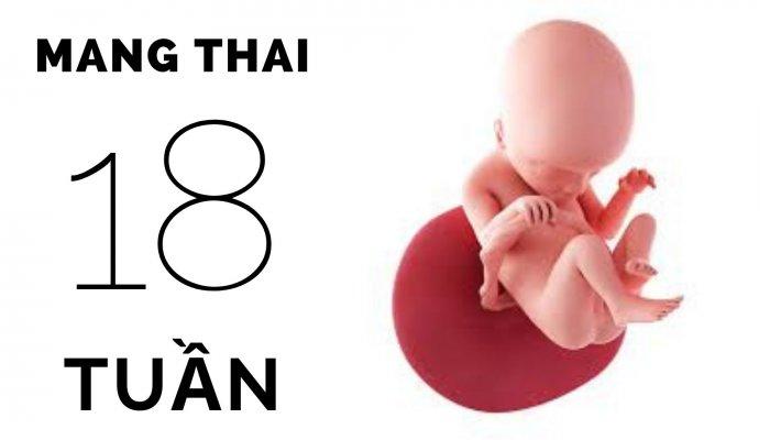 Thai 18 tuần