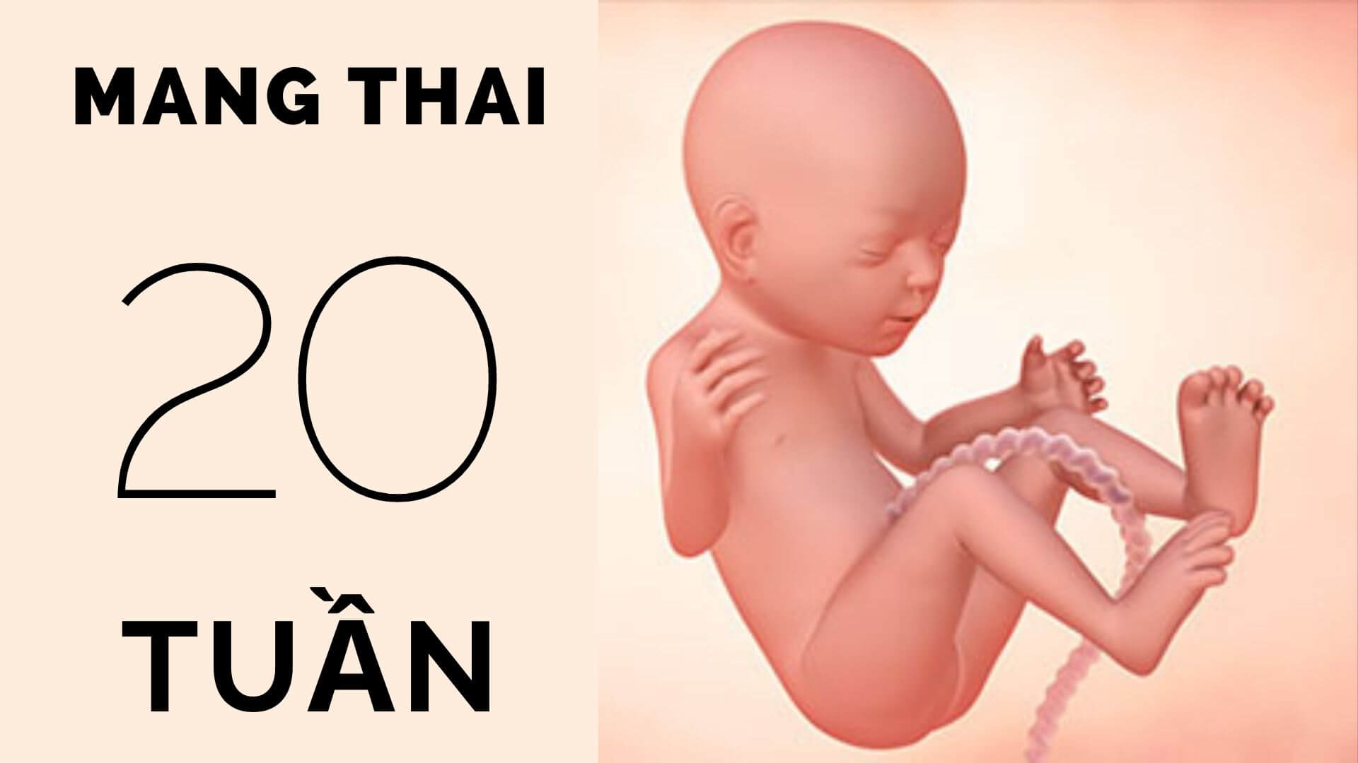 Thai 20 tuần tuổi